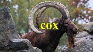 cox 300x169 - Thống kê ứng dụng trong nghiên cứu thú y